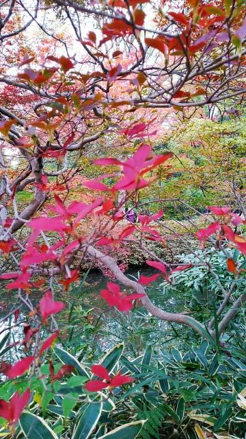 2019年 六義園の紅葉