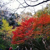美しい紅葉の中に自然の力強さを感じた「六義園の紅葉」
