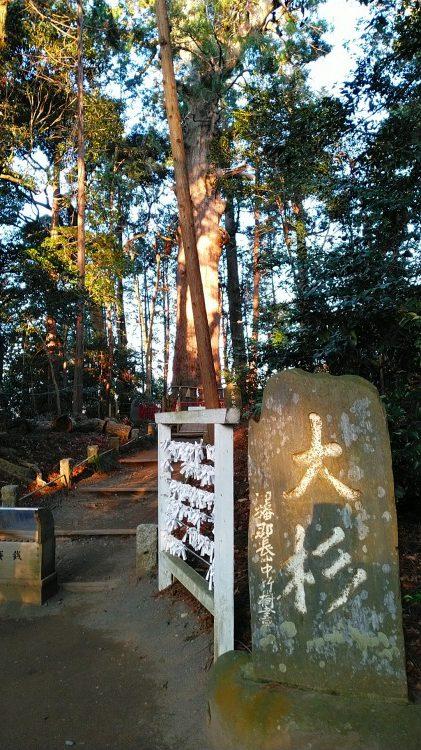 大杉|麻賀多神社、天之日津久神社(成田市)